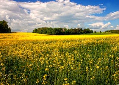 zrodla_rzeki_lyny_okolica--Nidzica-Mazury19 - Łyna - najbliższe okolice010